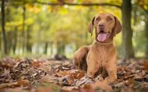 Животные: собака, листья, осень, боке
