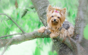 Животные: Йоркширский терьер, йорк, собака, дерево