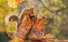 Животные: белка, мышь, мышка, ботинки, листья, осень