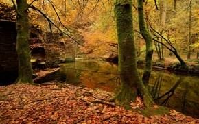 Пейзажи: осень, река, лес, деревья, мост, пейзаж