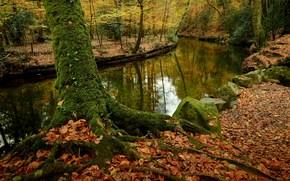 Природа: осень, река, лес, деревья, камни, природа