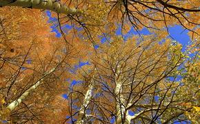 Природа: осень, деревья, кроны, небо, природа