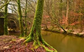 Природа: осень, река, мост, деревья, природа