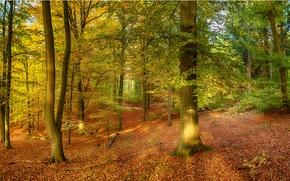 осень, лес, деревья, природа, панорама обои, фото