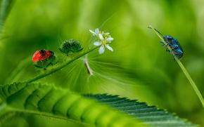 лист, цветы, жуки, макро обои, фото