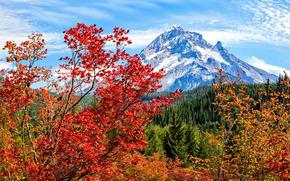 горы, осень, деревья, пейзаж обои, фото