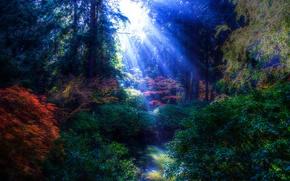 Пейзажи: парк, деревья, водоём, лучи солнца, пейзаж