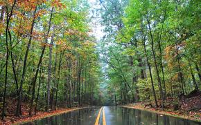 Пейзажи: дорога, деревья, осень, пейзаж