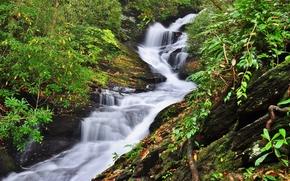 Природа: лес, деревья, скалы, речка, водопад, природа