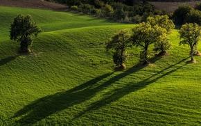 Пейзажи: Pievebovigliana, Monti Sibillini National Park, Marche, Italy, Пьевебовильяна, Национальный парк Монти-Сибиллини, Марке, Италия, поля, деревья