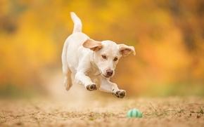 Животные: собака, щенок, мячик, игра, прыжок