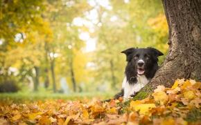 Животные: собака, дерево, осень, листья