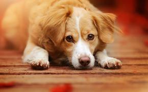 Животные: собака, взгляд, морда
