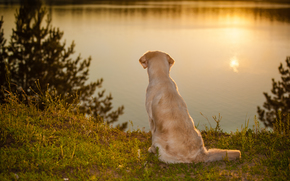 собака, вода, настроение обои, фото