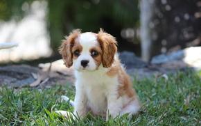 Животные: собака, щенок, трава