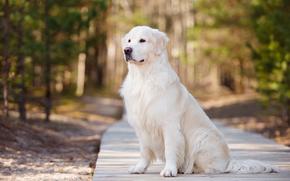 Животные: собака, пёс, красавец