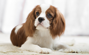 Животные: собака, взгляд, портрет