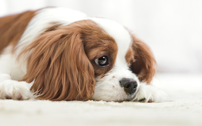 Животные: собака, морда, взгляд