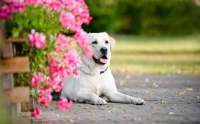 собака, цветы, портрет обои, фото
