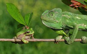 Животные: хамелеон, лягушка, ветка