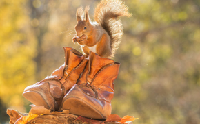 Животные: белка, рыжая, ботинки, осень