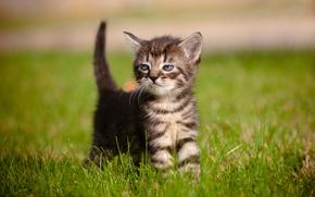 Животные: котёнок, малыш, трава