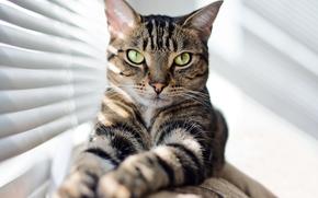 Животные: кот, кошка, взгляд