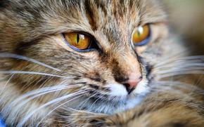 Животные: кот, кошка, морда