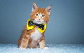 Животные: рыжий котёнок, котёнок, бабочка