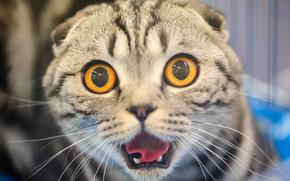 Животные: кот, кошка, морда, глазища, испуг, ужас
