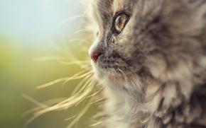 Животные: кот, кошка, мордочка, макро