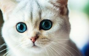 Животные: кошка, мордочка, глазища, взгляд, усы
