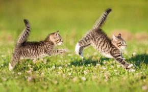 Животные: котята, двойняшки, парочка, хвостики, игра, догонялки, лужайка