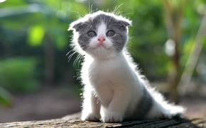 Животные: котёнок, малыш, лапочка