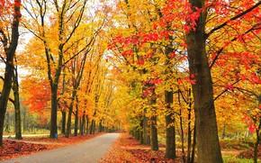 Пейзажи: осень, парк, дорога, деревья, пейзаж