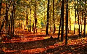 Пейзажи: осень, парк, дорога, деревья, водоём, пейзаж