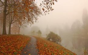 Пейзажи: осень, дорога, парк, канал, деревья, туман, пейзаж