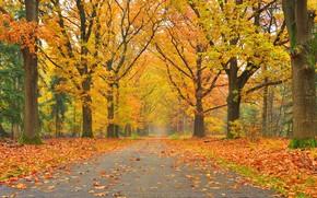 Пейзажи: осень, дорога, деревья, парк, пейзаж