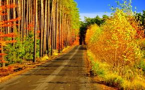 Пейзажи: осень, дорога, лес, деревья, пейзаж