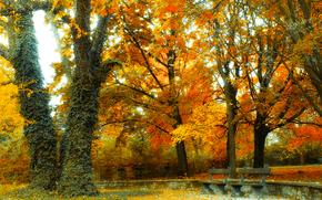 Пейзажи: парк, осень, деревья, лавочки, пейзаж