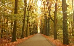 Пейзажи: осень, парк, деревья, дорога, пейзаж