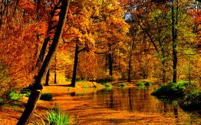 Природа: осень, лес, пруд, деревья, пейзаж