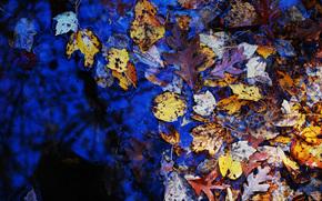 Природа: осень, листья, лужа, природа