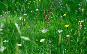 Макро: поле, трава, цветы, макро