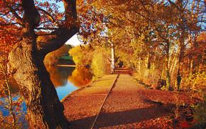 Пейзажи: осень, пруд, деревья, парк, дорога, пейзаж