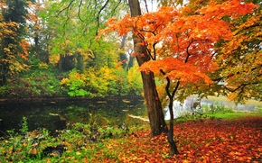 Пейзажи: осень, парк, пруд, деревья, пейзаж