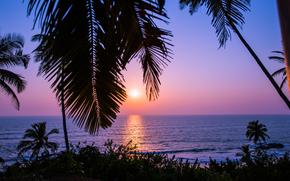 Пейзажи: Sunset in Goa, India, закат, море, пальмы, пейзаж