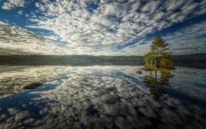 Обои Пейзажи: залив, вода, сосна, дерево, островок, небо, облака, отражение