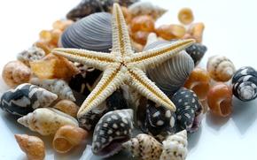 Макро: ракушки, морская звезда, макро