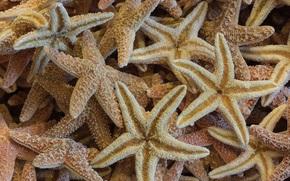 Текстуры: морские, звёзды, текстура